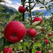 Ny regnskapsrådgiver landbruk, begynner 5. august